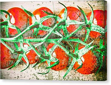 Tomatoes Canvas Print by Tom Gowanlock