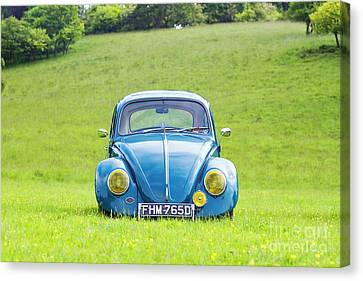 66 Beetle Canvas Print by Tim Gainey