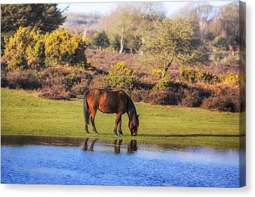 New Forest - England Canvas Print by Joana Kruse
