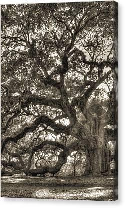 Angel Oak Canvas Print - Angel Oak Live Oak Tree by Dustin K Ryan