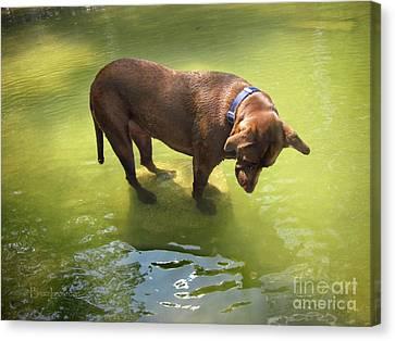 Dog Fishing 2 Canvas Print