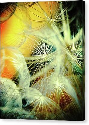 Dandelions Canvas Print by Iris Greenwell