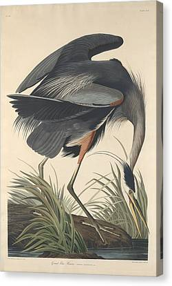 Great Blue Heron Canvas Print - Great Blue Heron by Dreyer Wildlife Print Collections