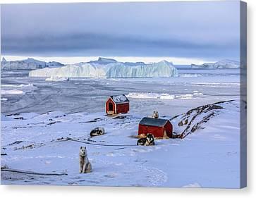 Huskies In Ilulissat, Greenland Canvas Print