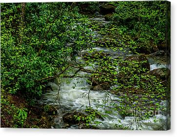 Canvas Print featuring the photograph Kens Creek Cranberry Wilderness by Thomas R Fletcher