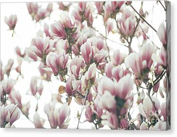 Seasons Canvas Print - Magnolia by Jelena Jovanovic