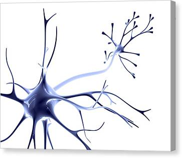 Nerve Cell Canvas Print by Pasieka