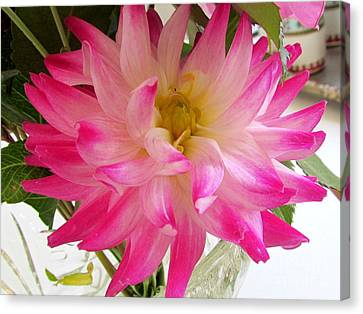 Pink Flower Canvas Print by Joyce Woodhouse