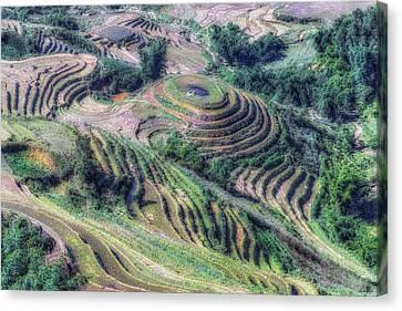 Sapa - Vietnam Canvas Print by Joana Kruse