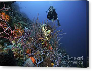 Scuba Diver Swims Underwater Amongst Canvas Print by Terry Moore