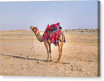 Thar Desert - India Canvas Print by Joana Kruse