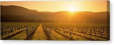 Orb Canvas Print - Vineyard, Napa Valley, California, Usa by Panoramic Images