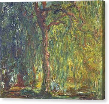 Weeping Willow Canvas Print by Claude Monet