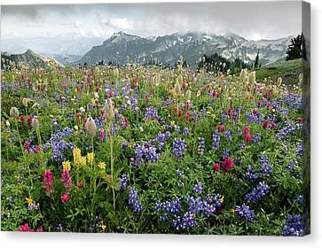 Wildflower Meadow Canvas Print by Bob Gibbons