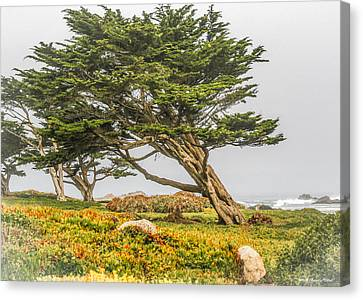 #7803 - Monterey, California Canvas Print