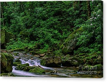 Kens Creek Cranberry Wilderness Canvas Print