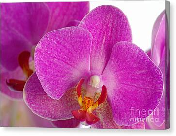 Canvas Print featuring the photograph Pink Orchid by Dariusz Gudowicz