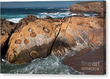 Point Lobos Concretions Canvas Print by Glenn Franco Simmons