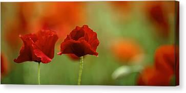 Summer Poppy Meadow Canvas Print by Nailia Schwarz