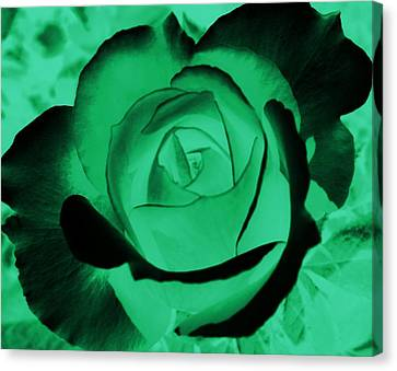 The Green Rose Canvas Print by Belinda Cox
