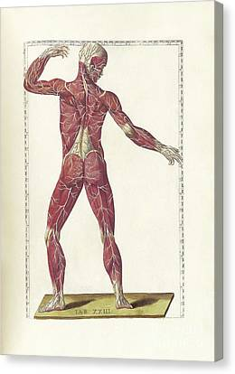 The Science Of Human Anatomy Canvas Print
