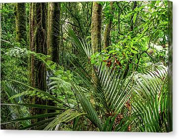 Canvas Print featuring the photograph Tropical Jungle by Les Cunliffe