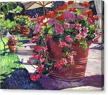 Geranium Color Pot Canvas Print by David Lloyd Glover