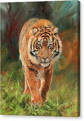 Amur Tiger Canvas Print by David Stribbling