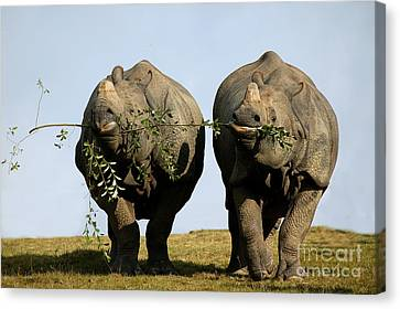 Indian Rhinoceros Rhinoceros Unicornis Canvas Print
