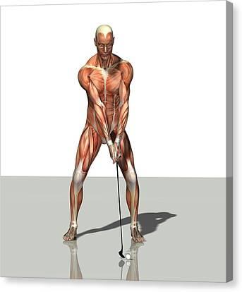 Male Muscles, Artwork Canvas Print by Friedrich Saurer