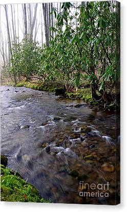 Middle Fork Of Williams River Canvas Print by Thomas R Fletcher
