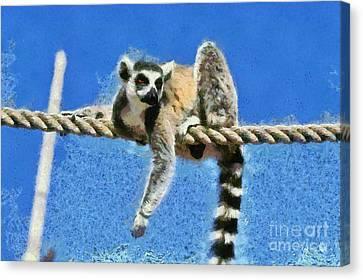 Ring Tailed Lemur Canvas Print