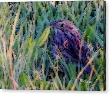 #9424 Spring Sparrow Canvas Print by Barbara Tristan
