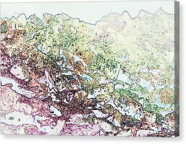 9708 Canvas Print by Jim Simms