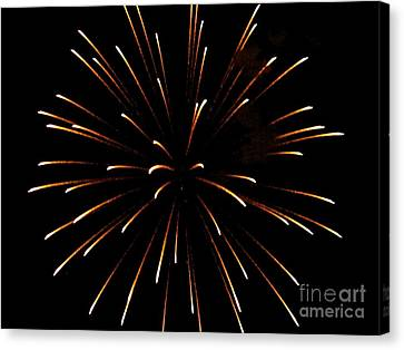 A 4th Of July Flower Canvas Print by Robert Wolverton Jr