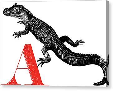 A Alligator Canvas Print by Thomas Paul