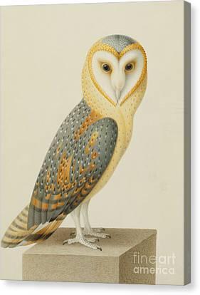 A Barn Owl Canvas Print by Nicolas Robert