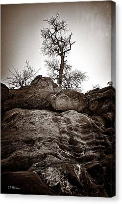 A Barren Perch - Sepia Canvas Print by Christopher Holmes