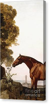 Chestnut Horse Canvas Print - A Bay Arab In A Coastal Landscape by George Stubbs