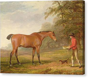 A Bay Horse Canvas Print by George Garrard