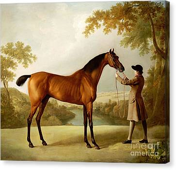 A Bay Racehorse Held By A Groom In An Extensive Landscape Canvas Print by George Stubbs