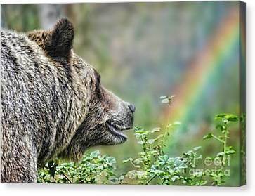 A Bear Watching The Sun Return Canvas Print by Jim Fitzpatrick