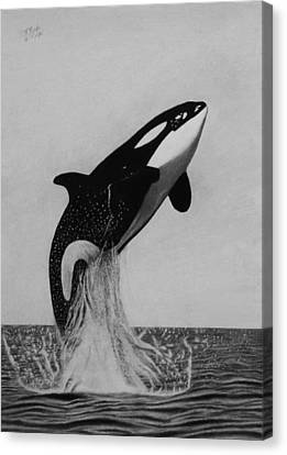 Orca - The Joy Of Freedom Canvas Print