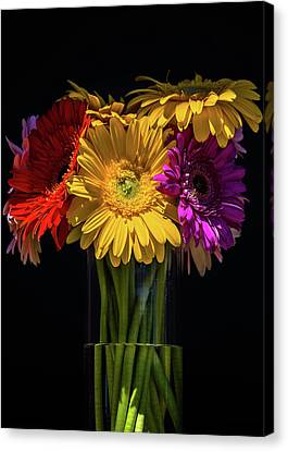 A Beautiful Reunion Canvas Print by Penny Meyers