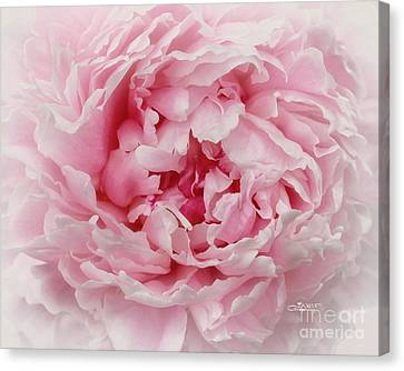 A Beauty At Close Range Canvas Print