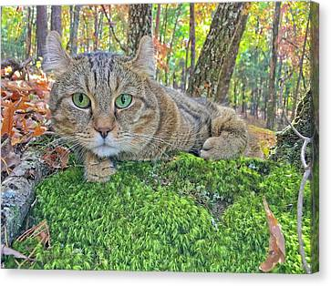 A Bed Of Moss Canvas Print by Susan Leggett