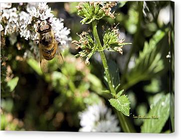 A Bee On A Flower Canvas Print