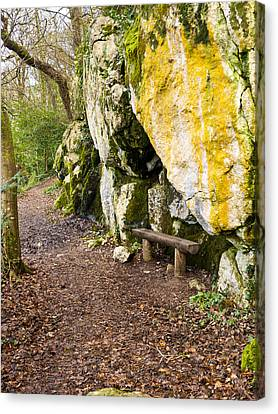A Bench In The Woods Canvas Print by Rae Tucker
