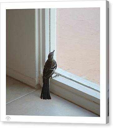 A Bird At A Plate Glass Window Canvas Print by Stan  Magnan