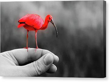 A Bird In Hand Canvas Print by Funky Focus